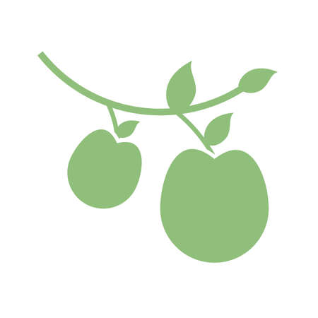 branch with apples icon over white background, silhouette style, vector illustration Çizim