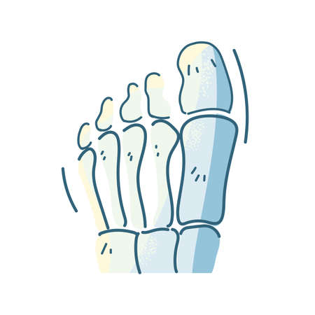 bones of the foot, body part on white background vector illustration design