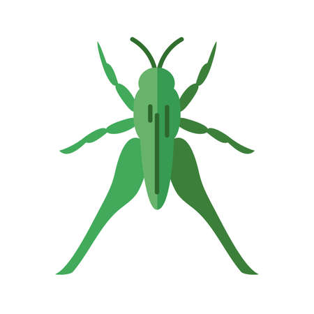 grasshopper insect over white background, flat style icon, vector illustration