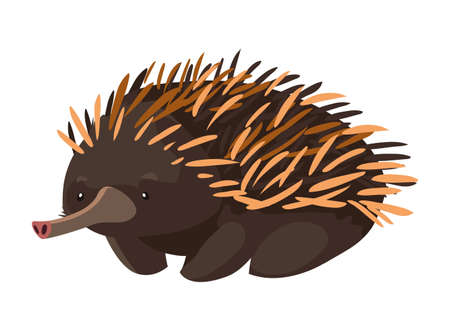 cute echidna on white background vector illustration design Ilustração