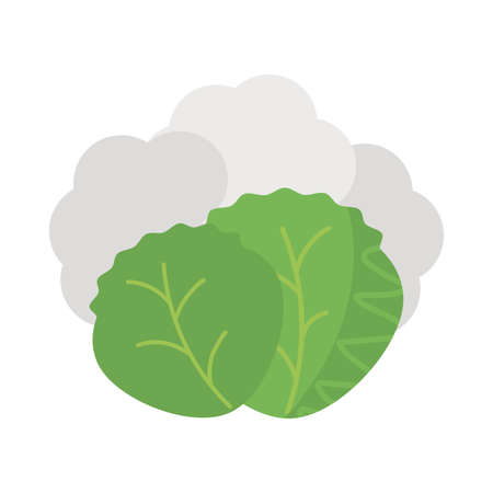 fresh and healthy vegetable, lettuce leaves on white background vector illustration design Иллюстрация