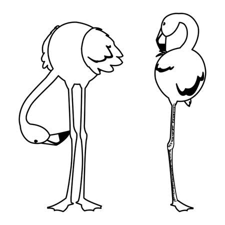 exotic flemish couple birds with different poses vector illustration design Векторная Иллюстрация