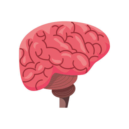 healthy brain on white background vector illustration design