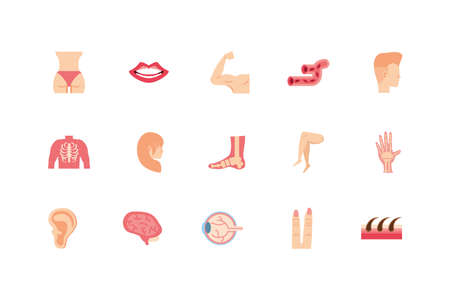 icon set design, Human body person people health anatomy biology and science theme Vector illustration