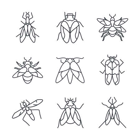 flies insects icon set over white background, line detail style, vector illustration