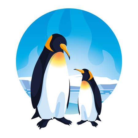 emperor penguins couple on white background vector illustration design Vecteurs