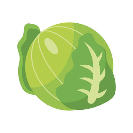 cabbage vegetable icon over white background, flat detail style, vector illustration Çizim