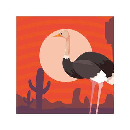 card with ostrich in australian landscape vector illustration design
