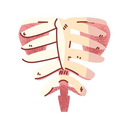 bones of the chest, body part on white background vector illustration design Stock Illustratie