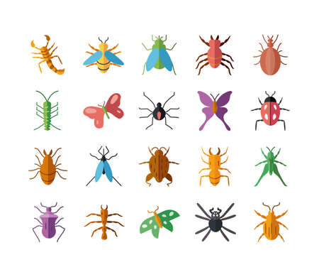 bugs and insect icon set over white background, flat style, vector illustration