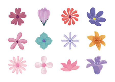 beautiful and colorful flowers icon set over white background, vector illustration