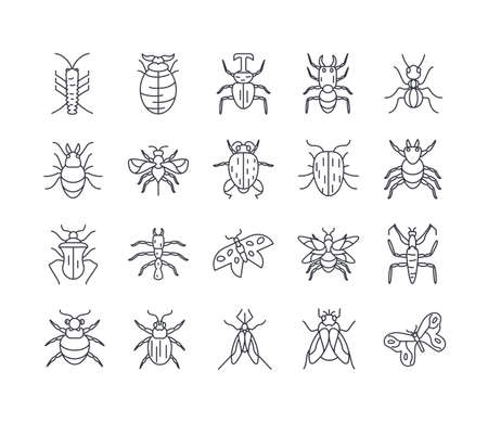 bugs and insect icon set over white background, line detail style, vector illustration