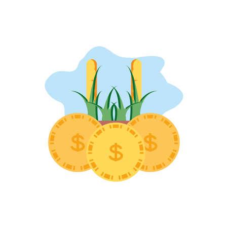 plantation corn natural with coins money vector illustration design