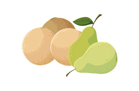 fresh fruits pears and melon vector illustration Çizim