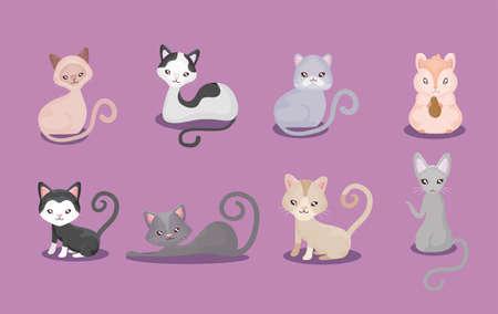 set of cutes cats, feline domestic vector illustration design