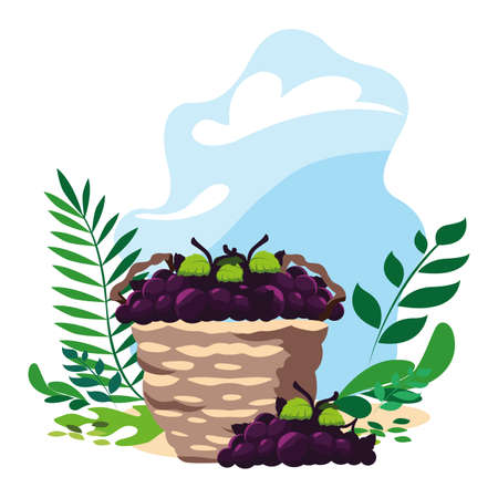 grapes with branch in wicker basket with background landscape vector illustration design
