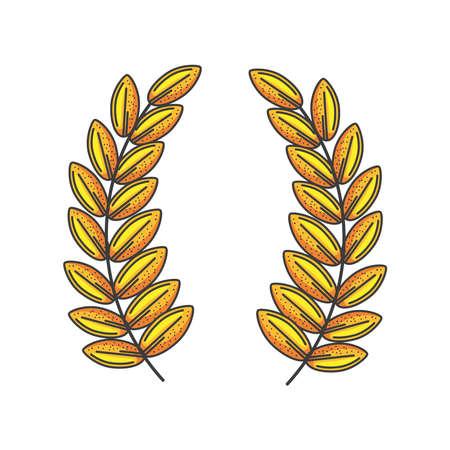 spike wheat on white background vector illustration design