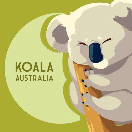 koala marsupial australian animal wildlife vector illustration