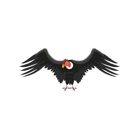condor bird animal