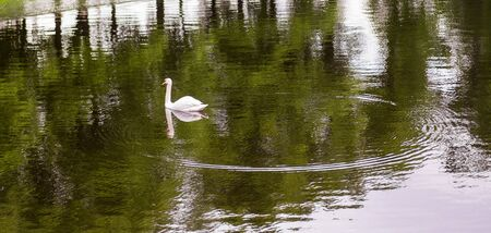shape cub: Swan and circles on the water. Summer Garden, St. Petersburg