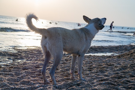 Photo of a dog in the rays of the setting sun on the seashore