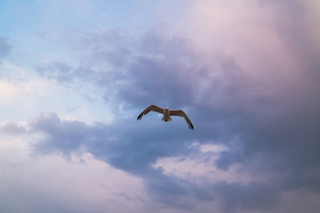 Flying seagull in the cloudy sky