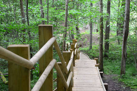 sigulda: Wooden bridge in the forest  Sigulda