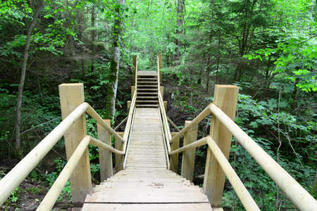 sigulda: Puente de madera en el bosque Sigulda