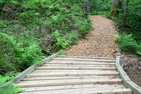 sigulda: Wooden road in the forest  Sigulda  Stock Photo