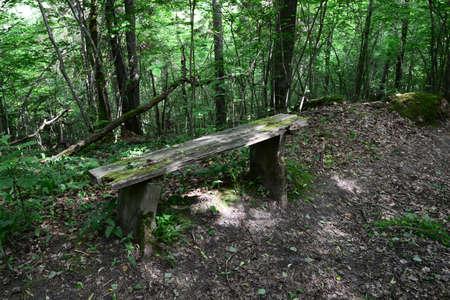 sigulda: Old bench in the forest  Sigulda, nature