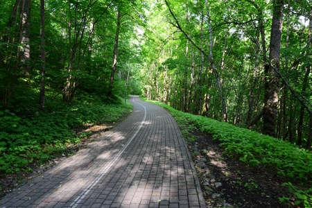 sigulda: Driveway in the forest  Sigulda  Stock Photo
