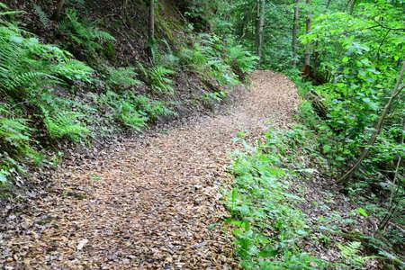 sigulda: Passway madera en el bosque Sigulda