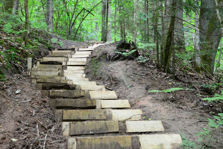 sigulda: Wooden stairs in the forest  Sigulda