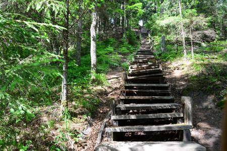 sigulda: Escaleras de madera viejos en el bosque Sigulda Foto de archivo