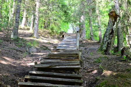 sigulda: Escaleras de madera viejas en el bosque Sigulda Foto de archivo
