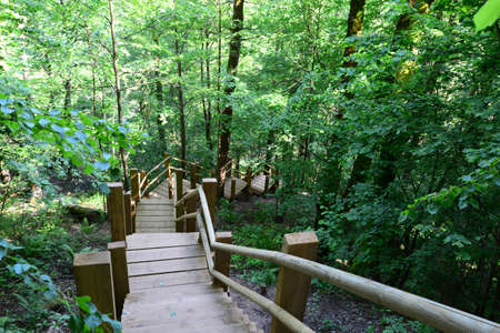 sigulda: Wooden bridge in the forest  Sigulda