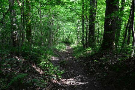 sigulda: Passway en el bosque Sigulda