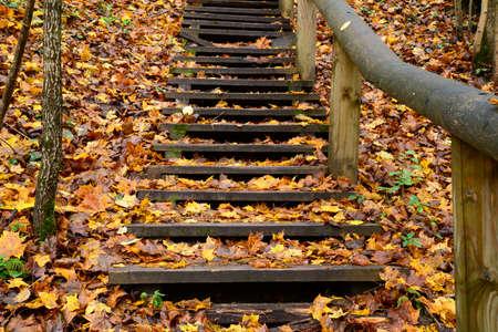 hojas antiguas: Escaleras de madera vieja en el bosque