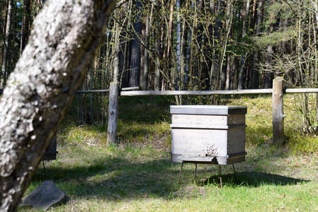 마을에서 나무 벌집