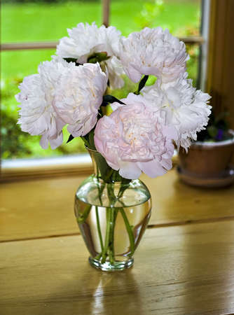 Vase of peony blooms in window photo