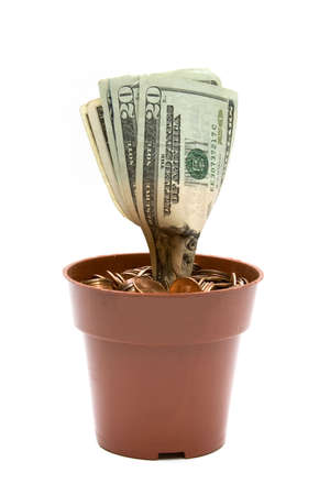 A money plant made out of US Currency in a pot of pennies on white background. photo