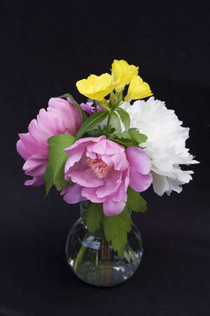Vase of fresh flowers against black background. Peonies and other spring plants. photo