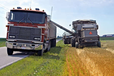 to thrash: Loading wheat from field to a waiting Semi truck to tranport to market.  Field in Toledo, Ohio
