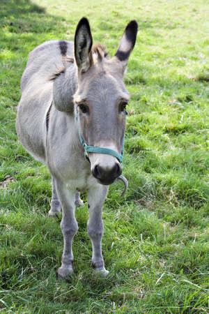 Cute donkey. Banco de Imagens