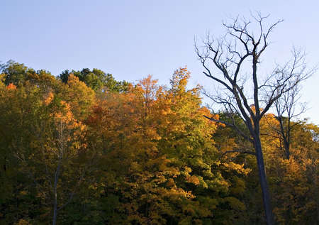 rule of thirds: A autumn sunset.  Landscape scenic - October Ohio