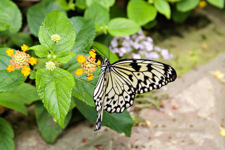 A butterfly feasting on a flower.