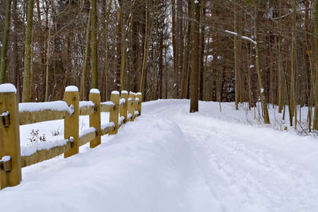 A snowy path into the forest.
