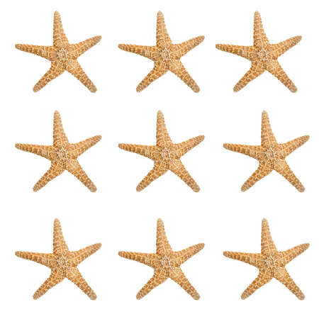 repeatable: Large repeatable starfish background isolated on white.