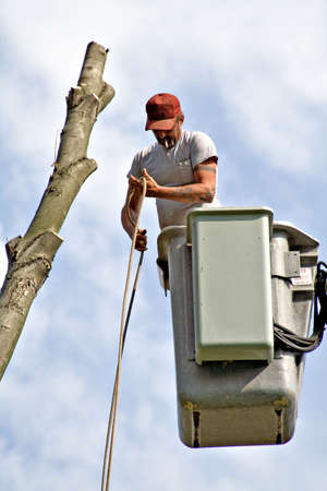 A tree worker in a bucket lift. Stock Photo