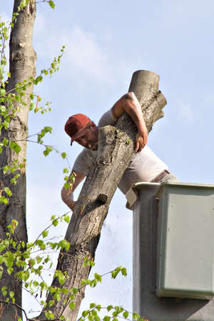 Professional tree worker - working from bucket lift. photo